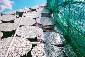 Ein Stehgeländer mit Netzen, errichtet von Industriekletterern, schützte die Dachhandwerker während des Baus