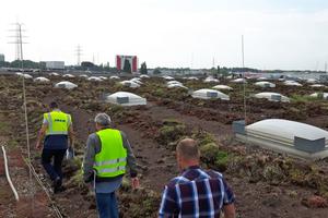 Ein Dachabschnitt nach Fertigstellung der SanierungFotos: Hum IDLinks: Das von der extensiven Begrünung befreite Dach vor der Sanierung