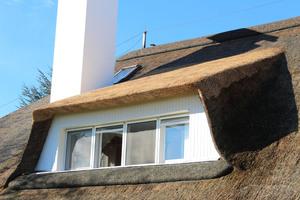 Der Unterschied zwischen alter und neuer Reetdeckung ist auf dem Gaubendach deutlich zu sehen
