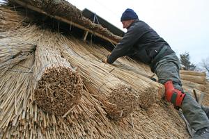"""Reetdachdecker Siegbert Evers befestigt das Reet auf dem Dach<div class=""""bildnachweis"""">Fotos: Stephan Thomas</div>"""