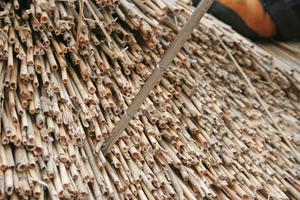 Mit einer Nadel misst der Reetdachdecker die Dicke der Reetschicht