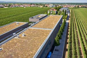 Der Neubau des Weinguts in Ellerstadt mit Dachbegrünung. Rechts im Bild ist die Kelterhalle zu sehenFotos: Alwitra/Sven-Erik Tornow
