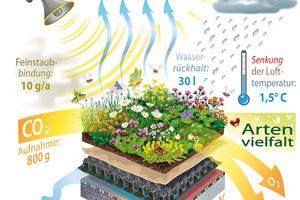 CO2 und Feinstaub binden, die Lufttemperatur in Städten senken oder Lärm vermindern: Die Grafik zeigt, was schon ein Quadratmeter Gründachfläche leisten kann