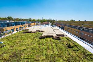 """Das """"Urbanscape""""-Dachbegrünungssystem in der Anwendung bei einer Dachsanierung in Augsburg"""