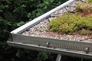 Ein Dachtraufprofil aus Edelstahl dient hier als Abschluss der Begrünung. Die Entwässerung erfolgt über die Dachrinne
