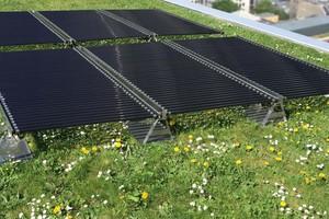 Die leuchtstoffröhrenförmigen Solarmodule der Tube Solar AG auf einem Gründach. Durch die Zwischenräume der Solarmodule kann Wasser und Lichtstrahlung zur darunter liegenden Vegetation durchdringen. Zudem bieten die leichten Module Statikvorteile und eine deutlich geringere Wind-Angriffsfläche<br />