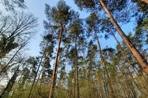 Als Kohlenstoffsenke spielt der Wald eine wichtige Rolle für den Klimaschutz