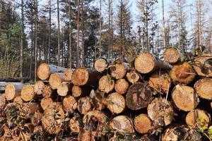 Wälder sollen eine große Menge an nutzbarem Holz produzieren, andererseits aber auch dem Schutz der Umwelt dienen
