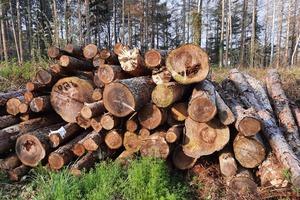 Während die Holzpreise für Waldbesitzer nur ganz langsam steigen, verdienen Sägewerke und Exporteure derzeit gutes Geld mit Nadelschnittholzprodukten, wie der ZVDH in einem aktuellen Faktenblatt beschreibt<br />