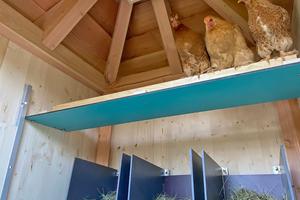 Im neuen Stall fühlen sich die Hühner wohl