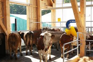 Auf der Messe haben viele Bauern Interesse an dem Stall in Modulbauweise angemeldet <br />