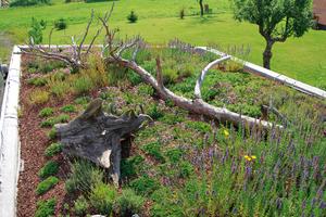 Abgestorbene Äste und Stämme lassen sich auf dem Gründach zur Gestaltung einsetzen