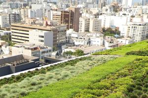 Eine Dachbegrünung bietet nicht nur mehr Grün in der Stadt, sondern sorgt für Wasserrückhalt und ein besseres Klima