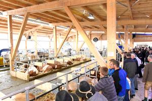 Der Kuhstall war der Besuchermagnet auf dem Bayerischen Zentral-Landwirtschaftsfest