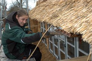 Augenmaß und Gefühl: Mit dem selbst gebauten Klopfbrett gibt Azubi Tim Kleeberg der Traufe die Form